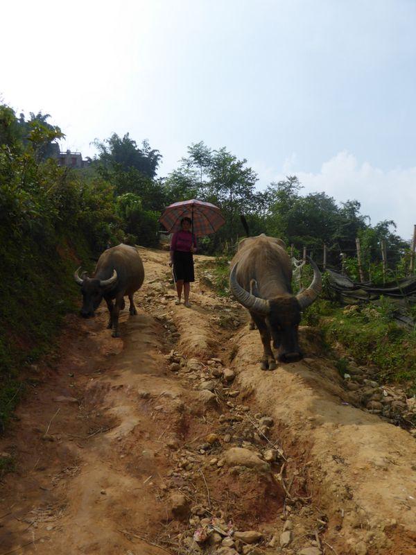 vietnam_0117